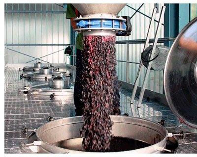Procesos de elaboración del vino en Bodegas Mauro