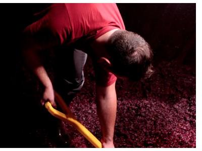 Trabajadores de Bodegas Vivanco con la uva