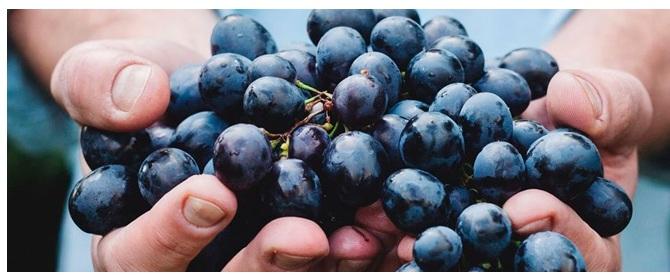 Uva vinos Colección Vintage en Vinorea
