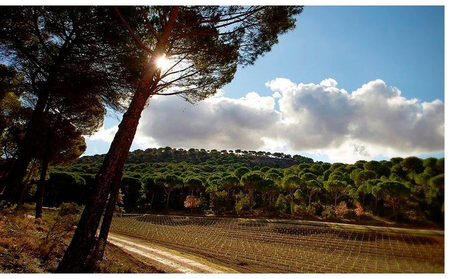 Entorno Bodegas Vega Sicilia