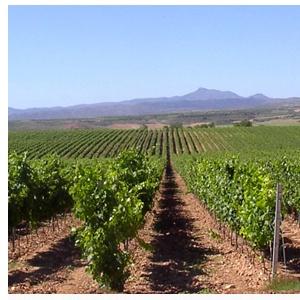 Viñedos Bodegas El Coto de Rioja